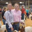 2016 Stock Shows by Maddie Peterson, Contributor