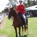 Equestrian Pics 2015
