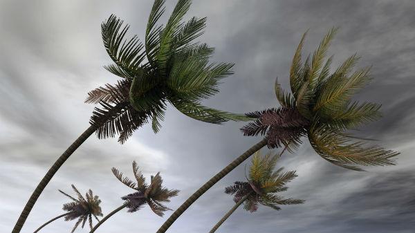 severe-weather-landscape-tips