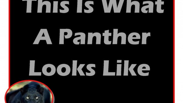 Panther Looks Like
