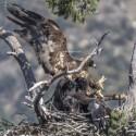 azusa-eagles