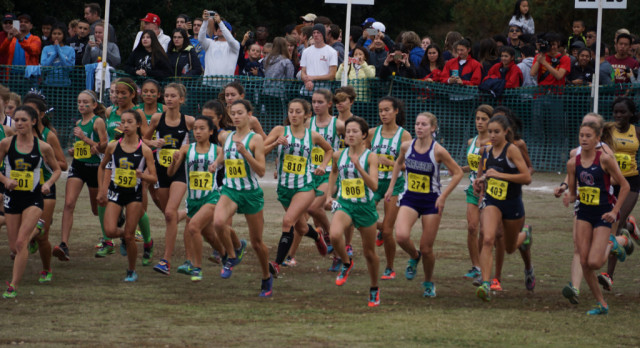 Stellar Cross Country Season Concludes at State Meet