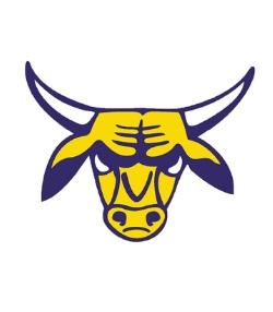 Brahma Bull