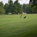 9/4 Golf