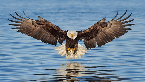 Alaska_Eagles/Robert oToole photography