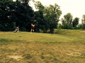 Taylor Ward tees off at the golf match, Thursday, against Elwood.