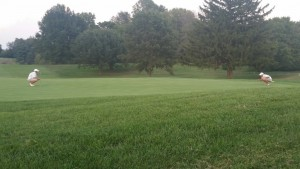 Oldham Cup (Day 2) - Brandon Hackworth & Colton Gilmet studying the green before winning putt.