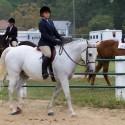2013 Equestrian