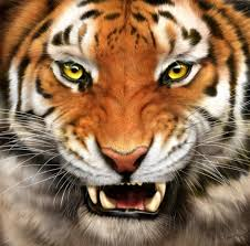 Tiger Football At Northwest Cabarrus