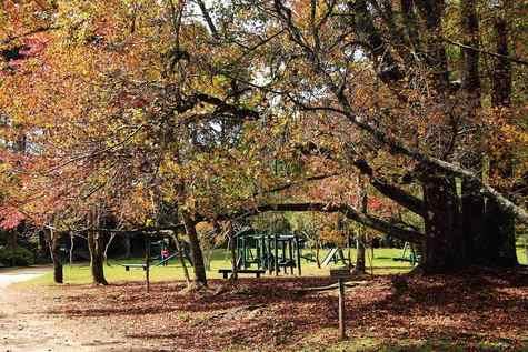 Campos-do-jordao-meio-ambiente-horto-florestal-img_2521-bx_easy-resize.com