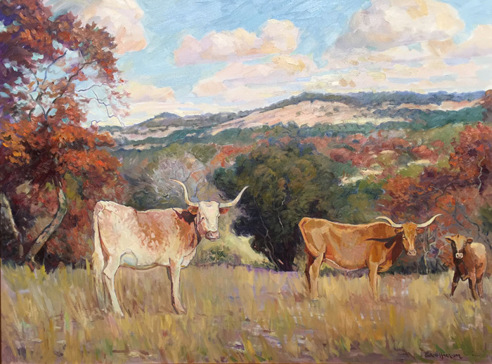 Longhorns and Spanish Oaks
