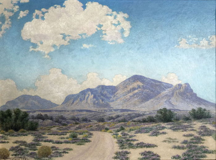 """Desert Verbena Franklin Mountains Near El Paso"""