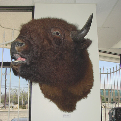 Buffaloi