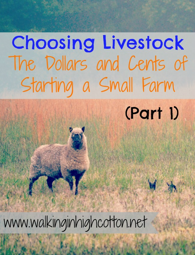 Choosing Livestock (Part 1) ...the Dollars and Cents of Starting a Small Farm (from Walking in High Cotton)