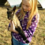 Twin Lambs at Sunrise…the Daily Farm Adventures {123}