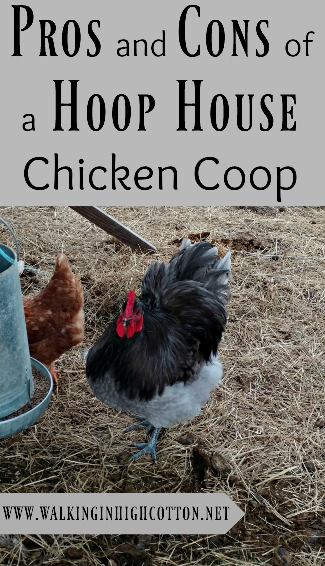 Pros and Cons of using a hoop house style chicken coop for your flock. Via Walking in High Cotton {www.walkinginhighcotton.net}