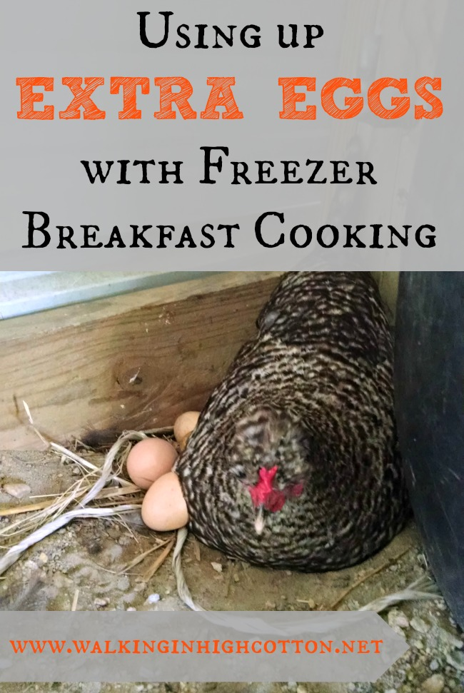How to use up those extra spring eggs with freezer breakfast cooking via Walking in High Cotton Great ideas for busy families, wholesome food, and waste-not-want-not values.