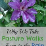 Why We Take Pasture Walks…Even in the Rain