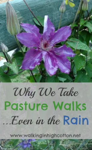 Why we walk the pastures and paths every day, rain or shine, and keep an eye on things. via Walking in High Cotton