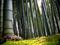 02237 bamboo 2560x1600