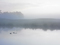 Ducks on a Misty Pond