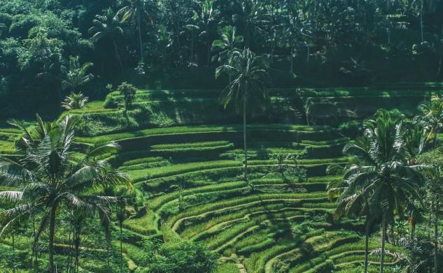 Bali Travel Diary – Ubud