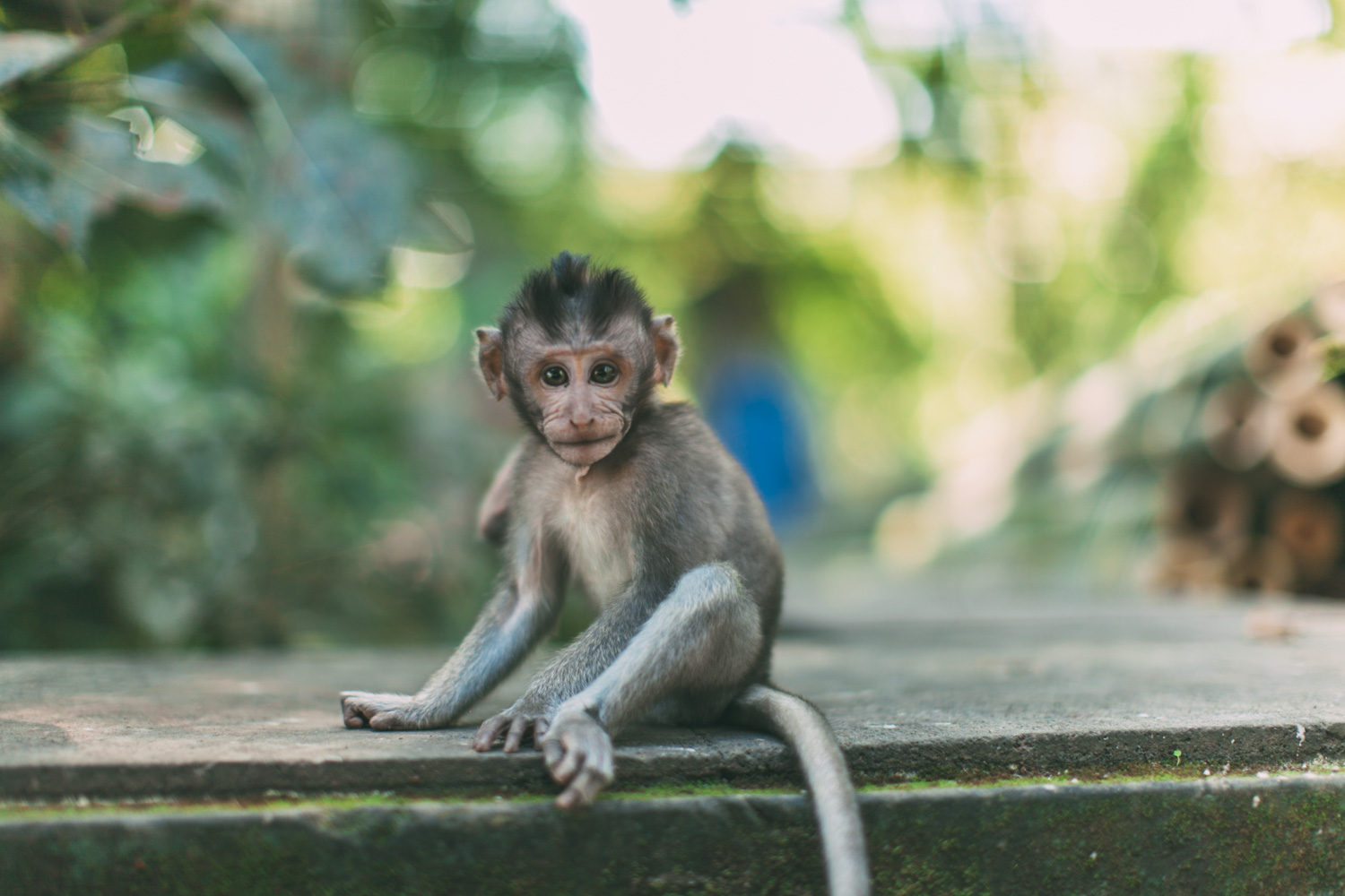 Ubud Monkey Forest (7 of 12)
