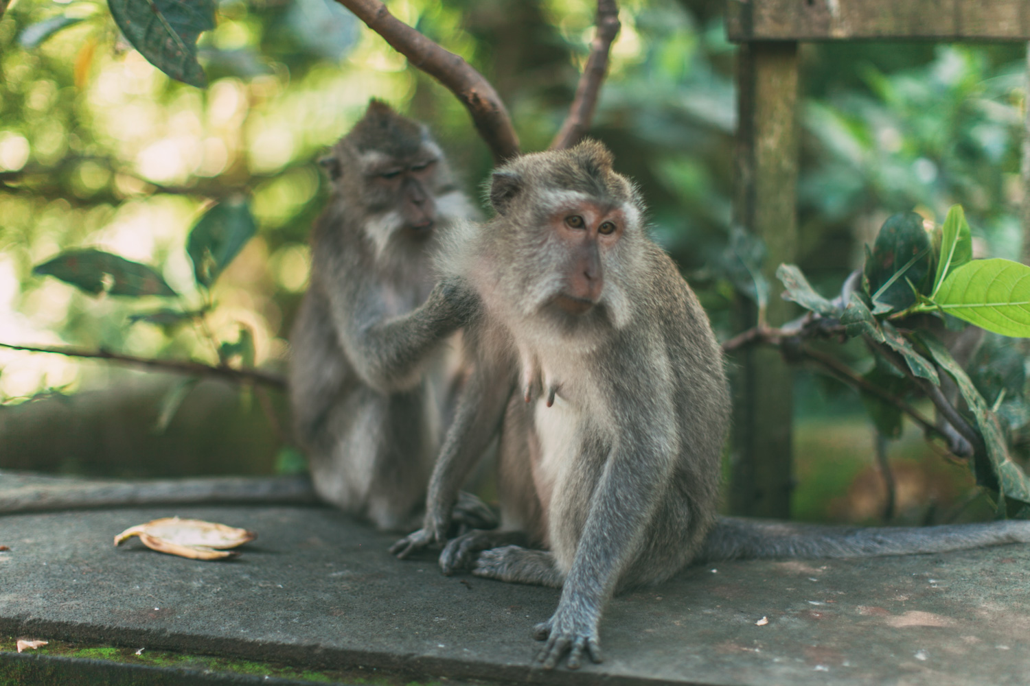 Ubud Monkey Forest (5 of 12)