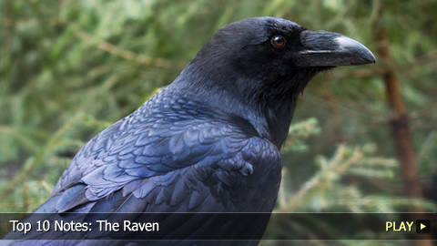 Top 10 Notes: The Raven