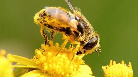 Top 10 Common Allergies