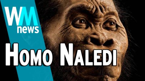 10 Homo Naledi Discovery Facts - WMNews Ep. 45