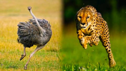 Top 10 Ridiculously Fast Animals