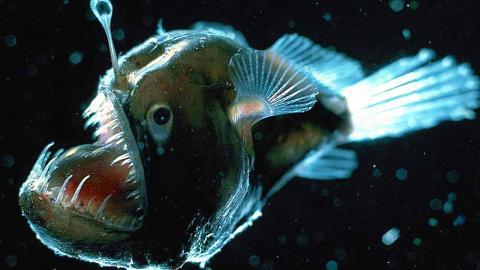 Top 10 Scariest Looking Fish
