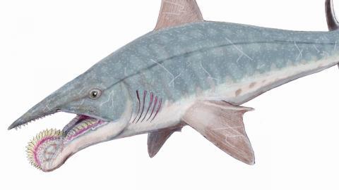Top 10 Strangest Prehistoric Creatures