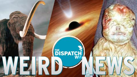 Mammoth Sex, Homemade Black Holes & Human Goats: The Dispatch #25