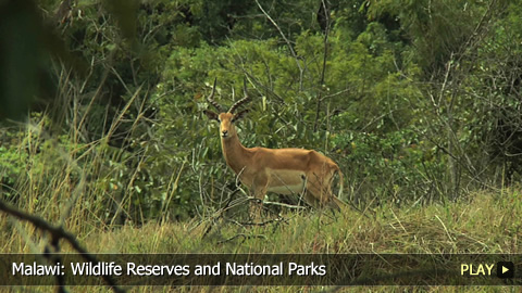 Malawi: Wildlife Reserves and National Parks