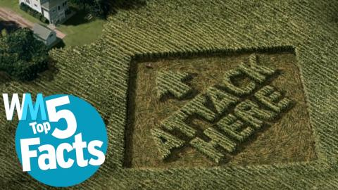 Top 5 Weirdest Crop Circle Facts