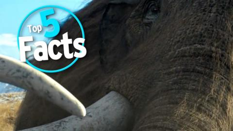 Top 5 Facts about Mammoths