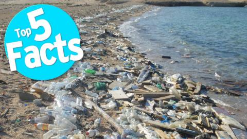 Top 5 Facts about Plastic