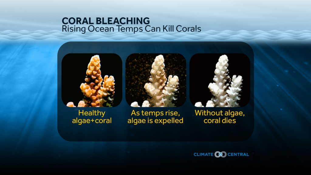 2016WorldOceansDay_CoralBleaching_en_title_lg