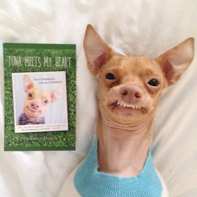 Tuna the Chiweenie & Pet Connect – Friday, March 6, 2015