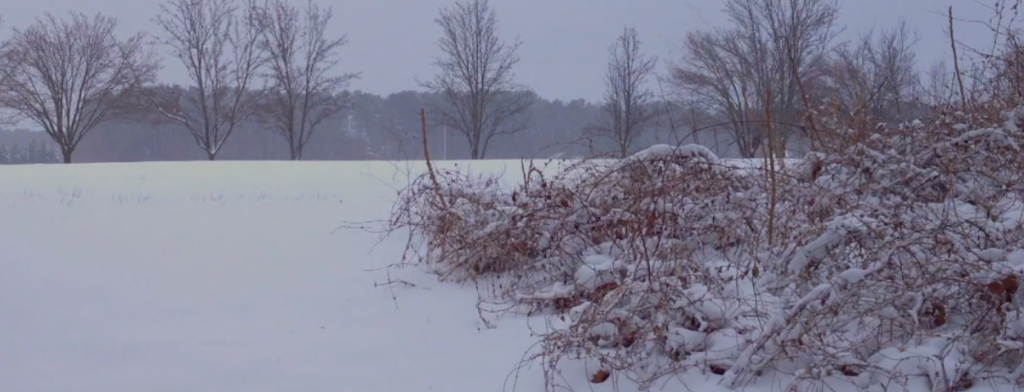 Travels With Charlie: The Ins and Outs of Snow Storms
