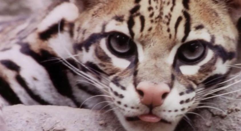 Delmarva Treasure: Salisbury Zoo – Tuesday, March 24, 2015