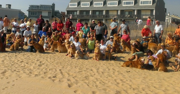 Golden Retrievers Return to Dewey Beach May 8-10