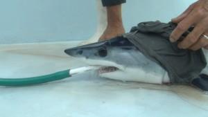 [Image: Shark1-300x169.jpg]