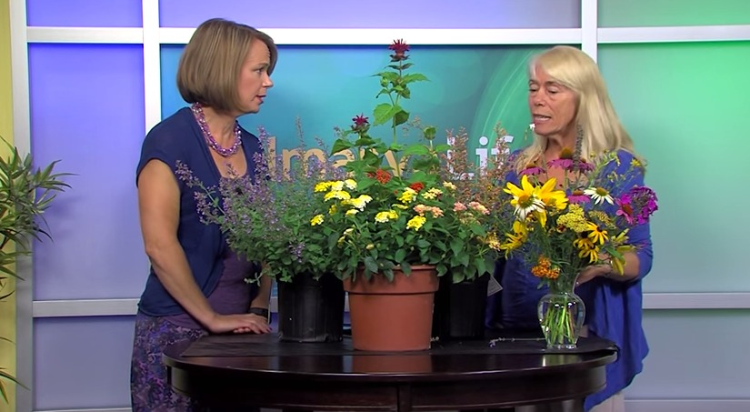 Bee Population & Planting Pollinators – Tuesday, June 30, 2015