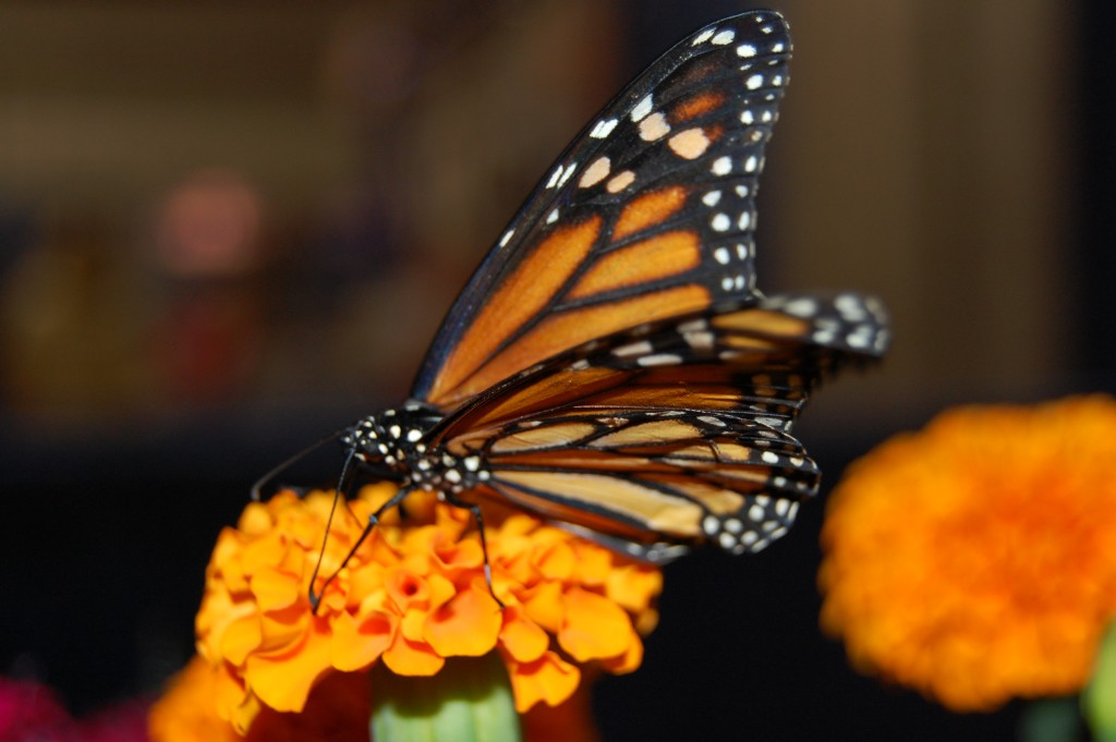 The Butterfly Exhibit – Delaware State Fair 2015