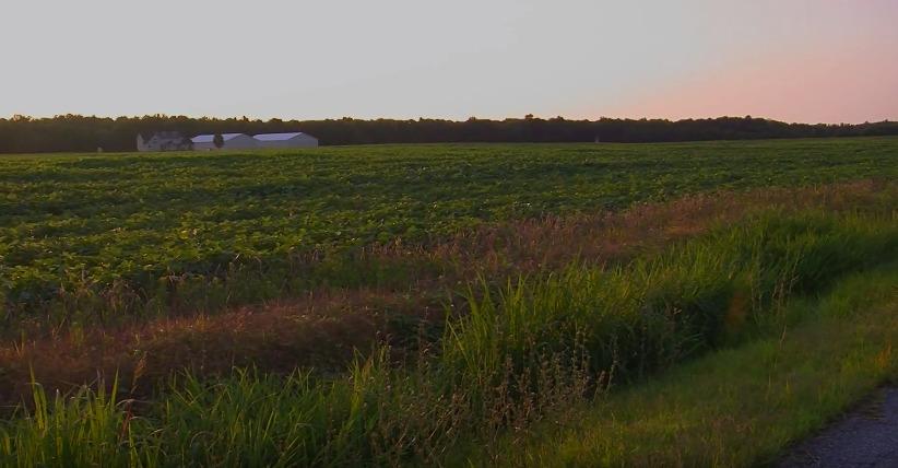 Honoring Delmarva Farmers – Czachorowski Farm
