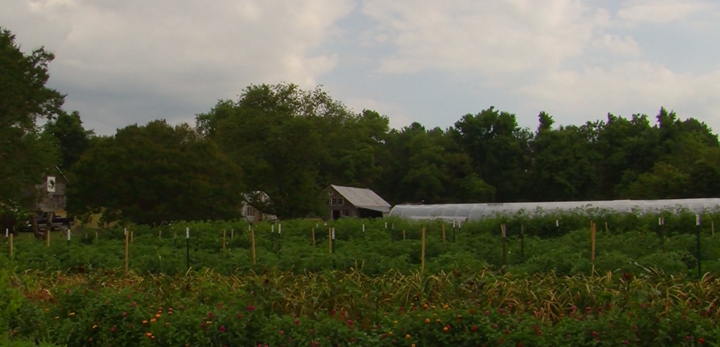 Travels With Charlie: Blueberries, Peaches, Apples and Corn with Charlie Paparella