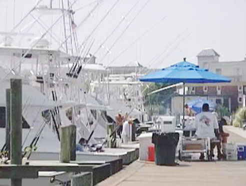 Annual White Marlin Open Gets Under Way in O.C.